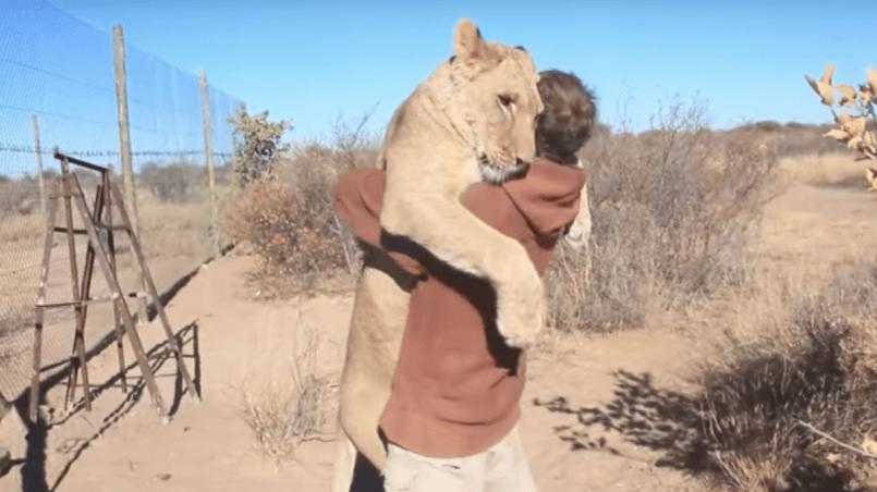 lion qui fait un câlin à un humain